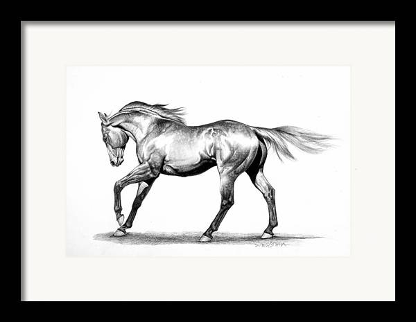 Thoroughbred Framed Print featuring the drawing Proud by Howard Dubois