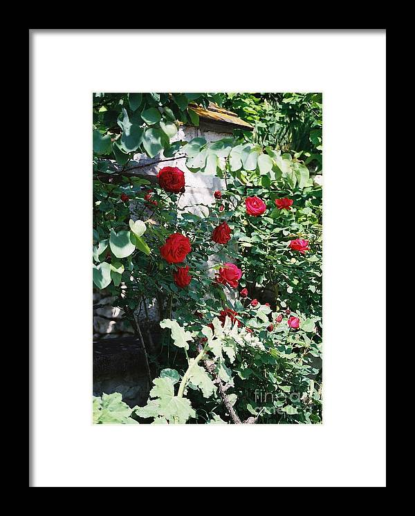 Floral Framed Print featuring the photograph Provence Red Roses by Nadine Rippelmeyer