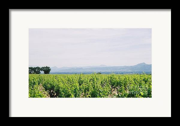 France Framed Print featuring the photograph Provence Spring Vineyard by Nadine Rippelmeyer