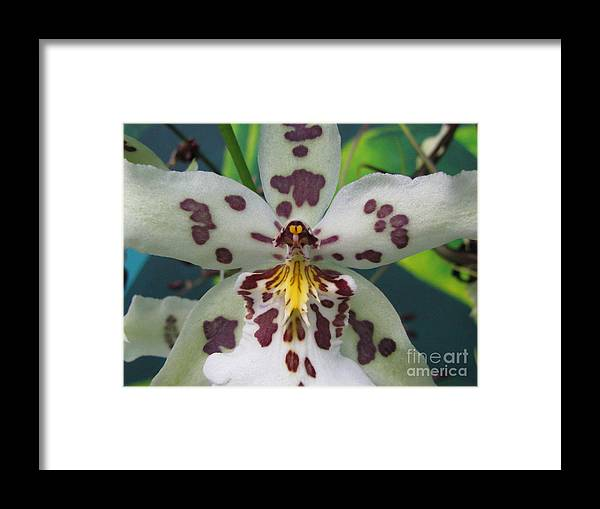 Flower Framed Print featuring the photograph Provoking by Tina Marie