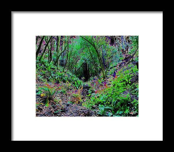Ferns Framed Print featuring the photograph Psychedelic Fern Gully On Mt Tamalpais by Ben Upham III