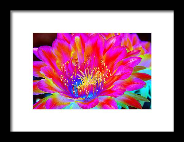 Flower Framed Print featuring the photograph Psychedelic Pink Flower by Richard Henne