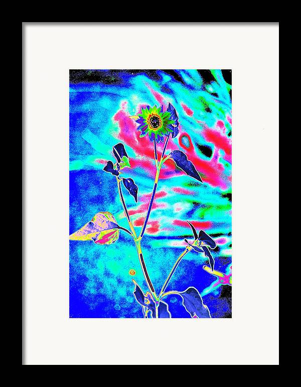 Psychedelicized Daisy Framed Print featuring the photograph Psycho Daisy by Richard Henne