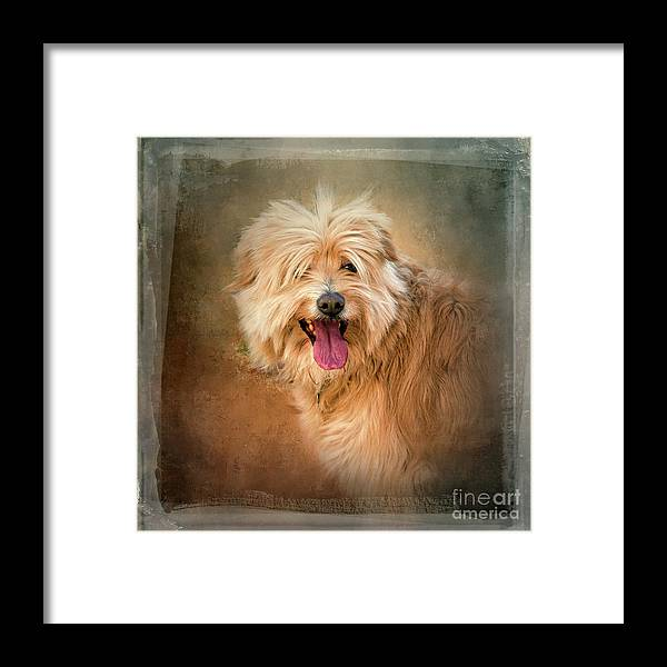 Dog Framed Print featuring the photograph Pucci by Judith Flacke