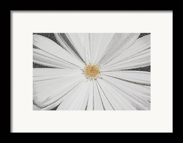 Daisy Framed Print featuring the photograph Puckered Daisy by Jennifer Englehardt