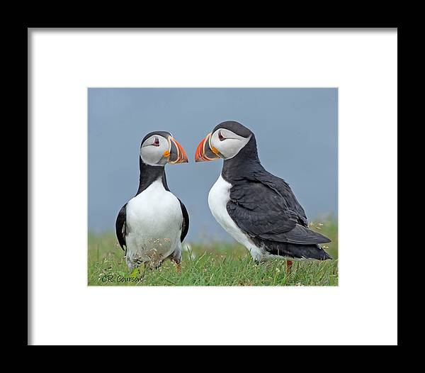 Atlantic Puffin Framed Print featuring the photograph Puffin Couple by CR Courson
