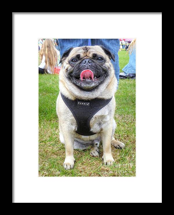Pug Framed Print featuring the photograph Pug Portrait by Vicki Spindler
