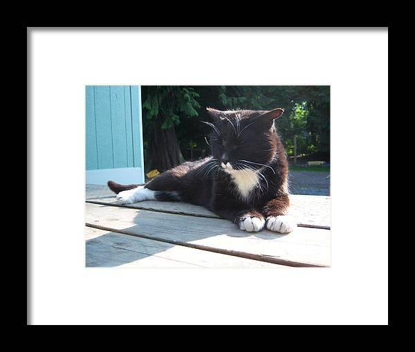 Cat Framed Print featuring the photograph Puggy by Ken Day