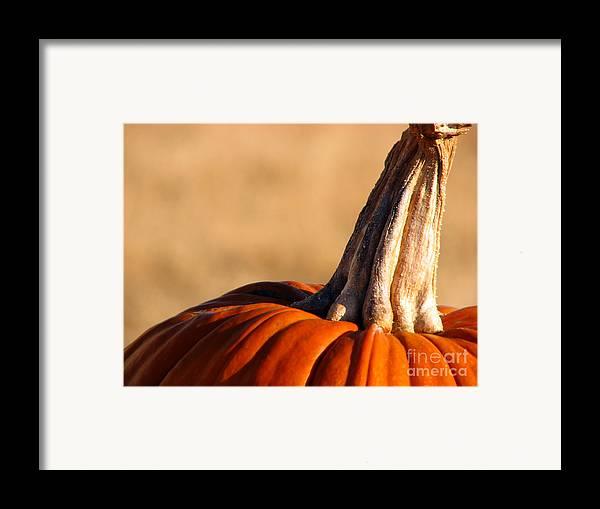 Pumpkins Framed Print featuring the photograph Pumpkin by Amanda Barcon