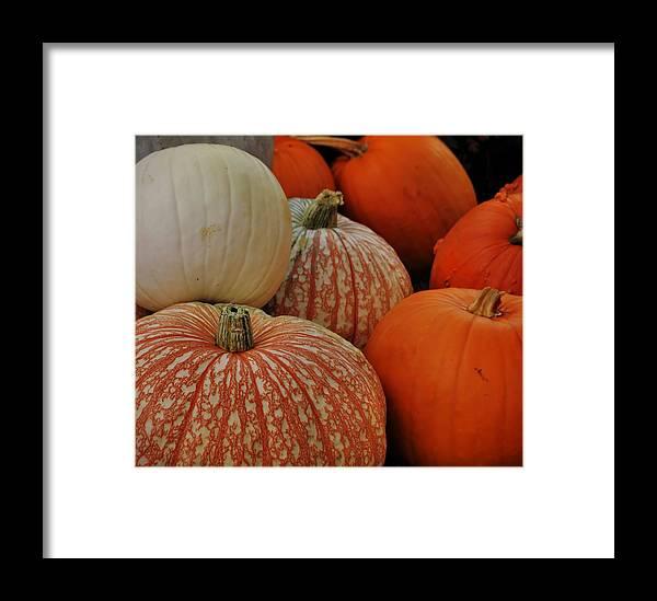 Pumpkin Framed Print featuring the photograph Pumpkin Colors by JAMART Photography