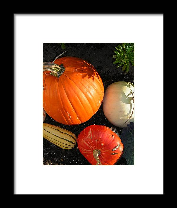 Pumpkins Framed Print featuring the photograph Pumpkin by Heather Weikel