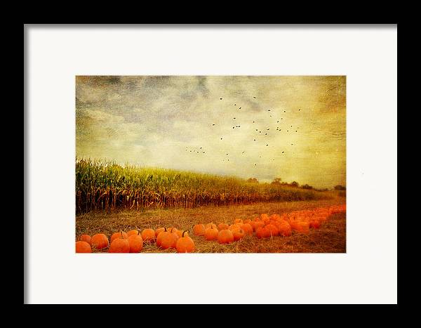 Pumpkins Framed Print featuring the photograph Pumpkins In The Corn Field by Kathy Jennings