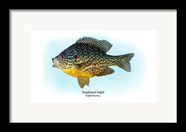 Pumpkinseed Sunfish Framed Print featuring the painting Pumpkinseed Sunfish by Ralph Martens