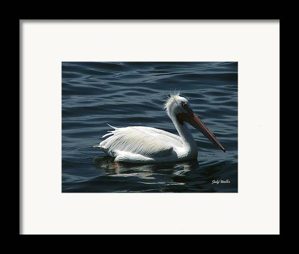 Birds Framed Print featuring the photograph Punk Pelican - Side View by Judy Waller