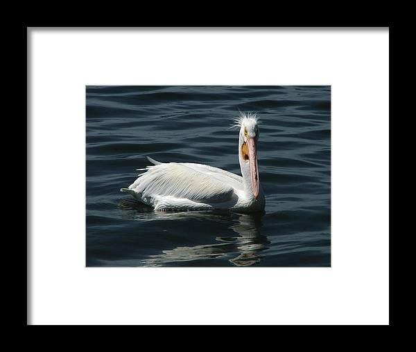 Water Framed Print featuring the digital art Punk Pelican by Judy Waller
