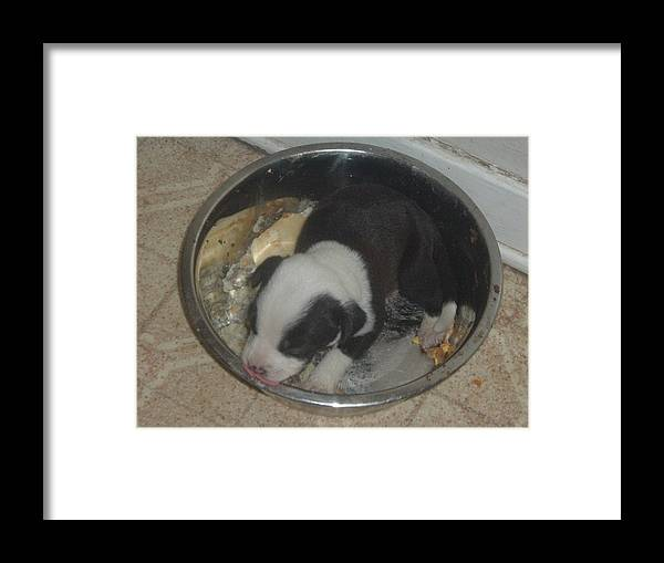 Golden Lab And Pink Nosed Pit Mix Puppy In A Bowl Framed Print featuring the photograph Puppy Chow by Mary Kaser