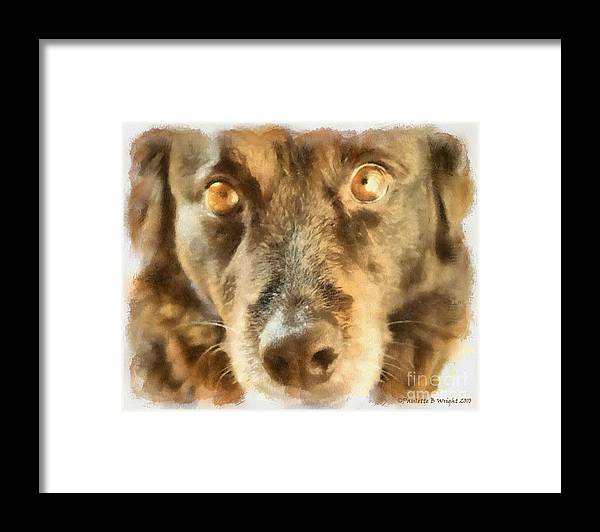 Dog Framed Print featuring the photograph Puppy Eyes by Paulette B Wright
