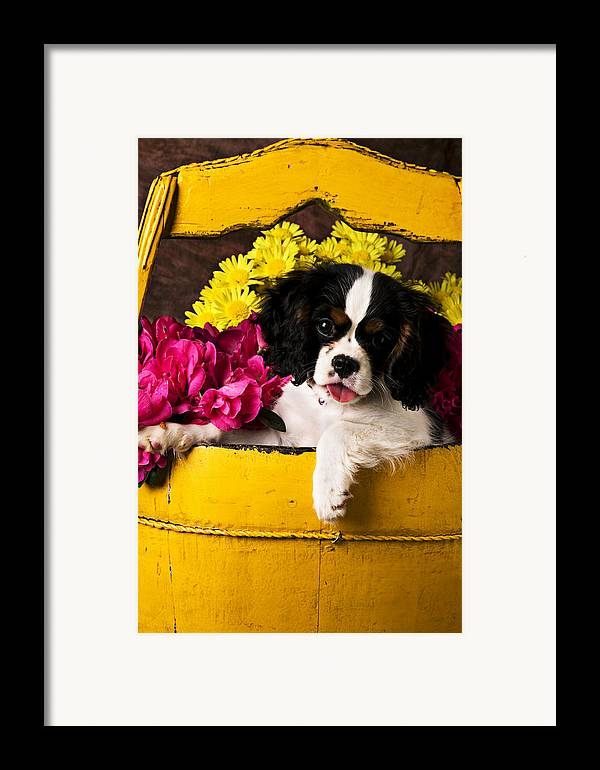 Puppy Dog Cute Doggy Domestic Pup Pet Pedigree Canine Creature Soccer Ball Framed Print featuring the photograph Puppy In Yellow Bucket by Garry Gay