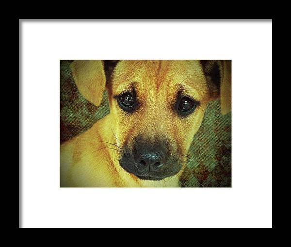 Puppy Framed Print featuring the photograph Puppy Portrait by KaFra Art