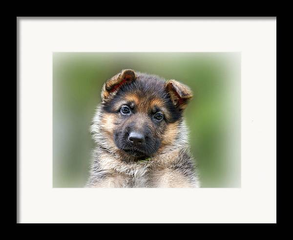 Puppies Framed Print featuring the photograph Puppy Portrait by Sandy Keeton