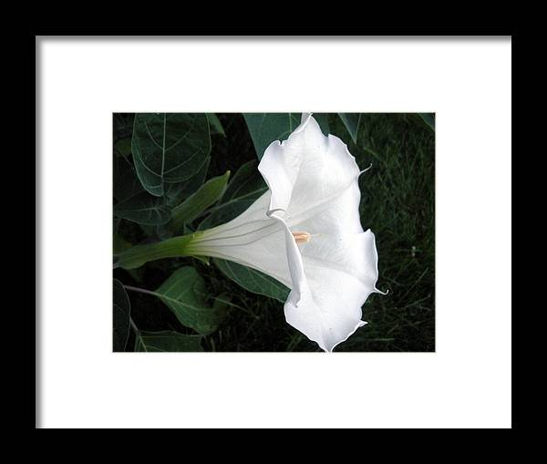 White Flower Framed Print featuring the photograph Pure And Lovely IIi by Jeanette Oberholtzer