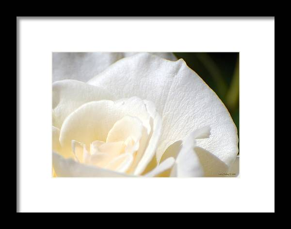 Flower Framed Print featuring the photograph Pure by Larry Keahey