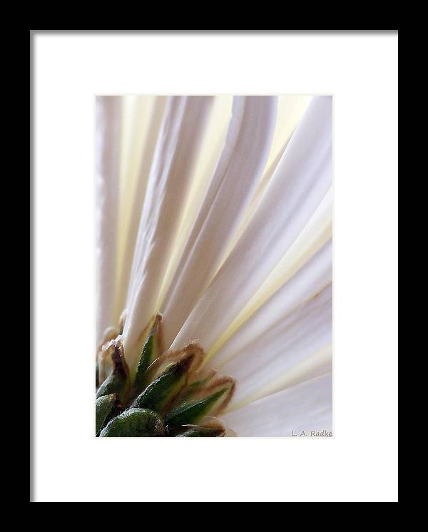 Macro Framed Print featuring the photograph Pure by Lauren Radke