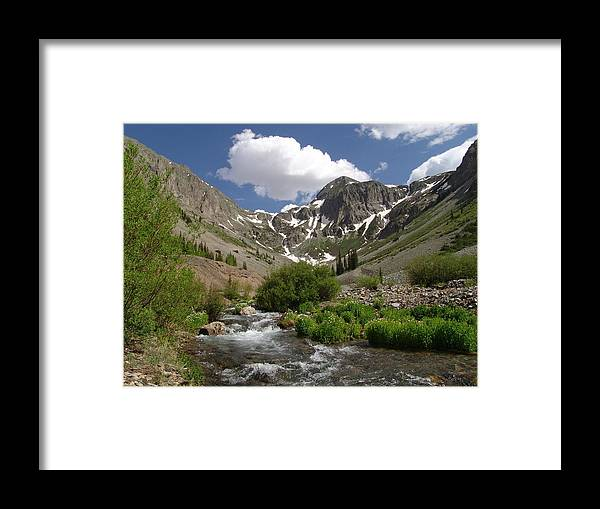 Trees Framed Print featuring the photograph Pure Mountain Beauty by Carol Milisen