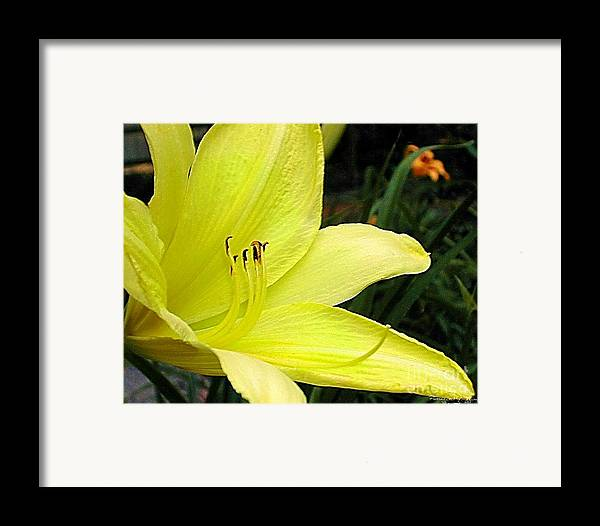 Fine Art Photography Framed Print featuring the photograph Pure Sunshine by Patricia Griffin Brett