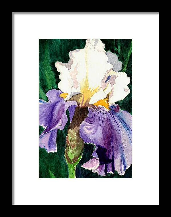 Flower Framed Print featuring the painting Purple And White Iris by Janis Grau