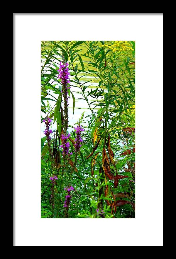 Purple Framed Print featuring the photograph Purple And Yellow by Ian MacDonald