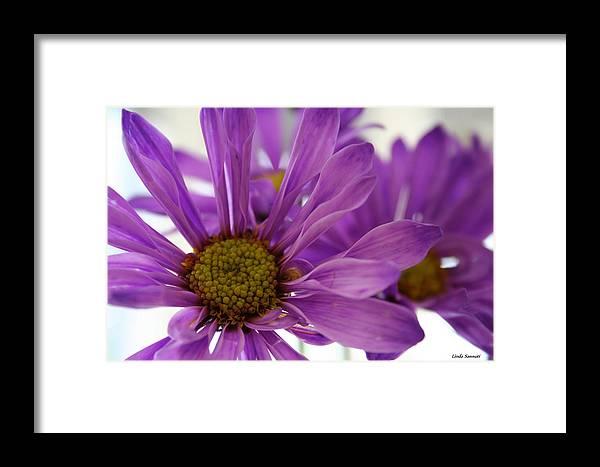 Flowers Purple Macro Daisy Spring Yellow Digital Photography Framed Print featuring the photograph Purple Delight by Linda Sannuti