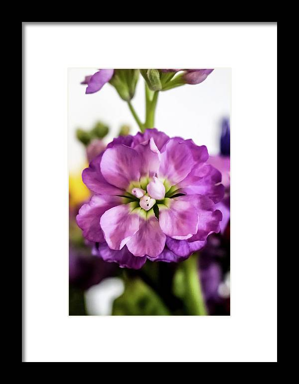 Purple Delphinium Framed Print featuring the photograph Purple Delphinium by Cynthia Woods