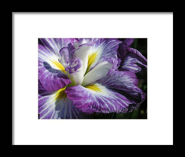 Flower Framed Print featuring the photograph Purple Flower 1 by Holly Wolfe