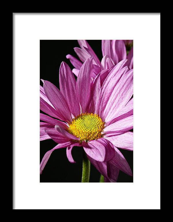 Botanical Framed Print featuring the photograph Purple Flower by Edward Myers