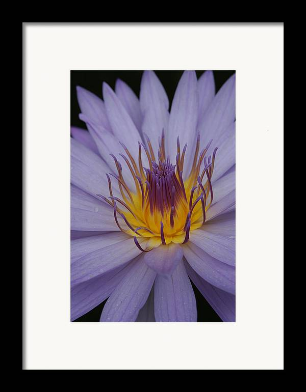 Purple Flower Framed Print featuring the photograph Purple Flower by Linda Russell