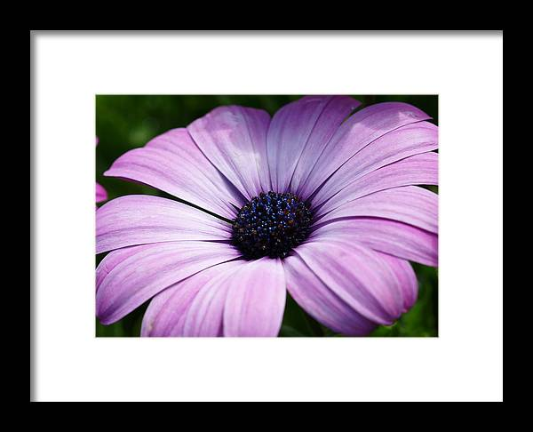 Flower Framed Print featuring the photograph Purple Flower Macro by Edward Myers