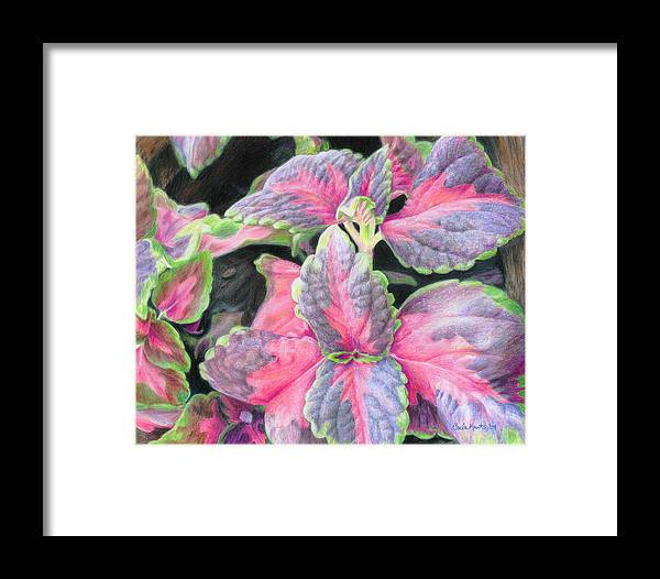 Purple Framed Print featuring the drawing Purple Flowering Plant by Carla Kurt