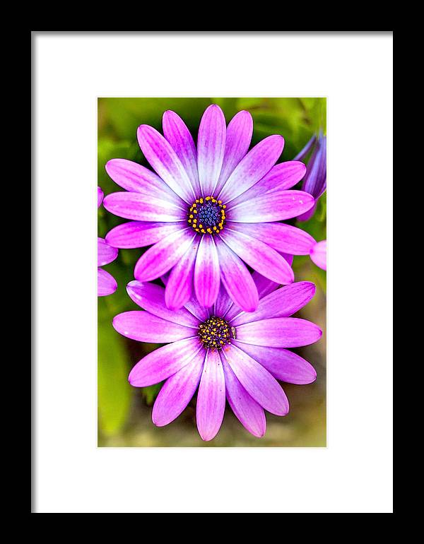 Spring Flowers Framed Print featuring the photograph Purple Flowers by Az Jackson
