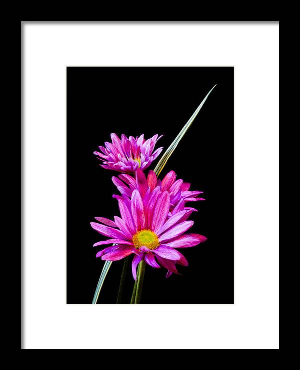 Botanical Framed Print featuring the photograph Purple Flowers by Edward Myers