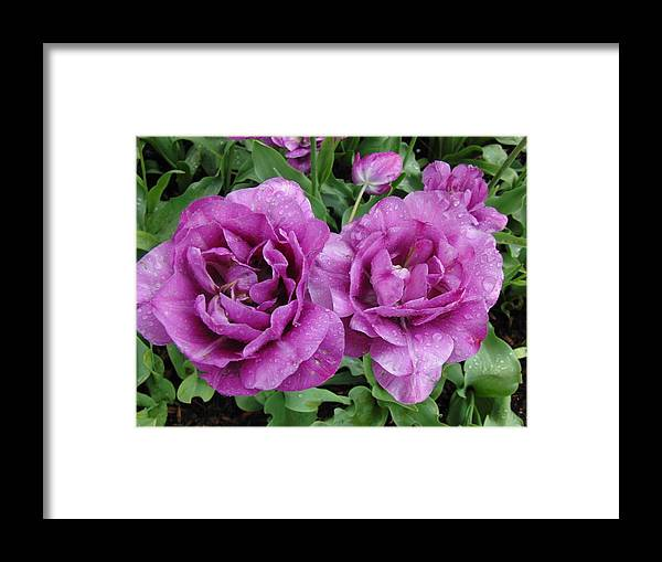 Flowers Framed Print featuring the photograph Purple Flowers by Rachel Figueroa