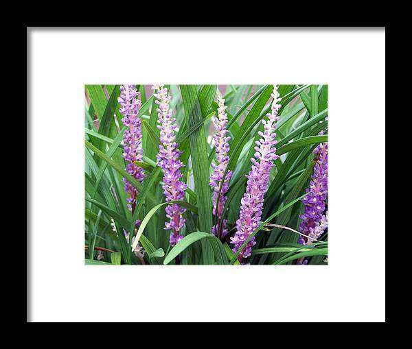 Flower Photography Framed Print featuring the photograph Purple Grass by Evelyn Patrick