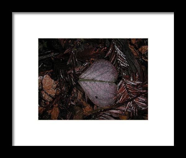 Leaf Framed Print featuring the photograph Purple Heart Shaped Leaf by Ian Michaud
