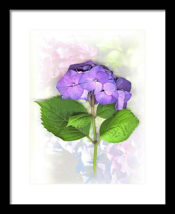 Purple Framed Print featuring the mixed media Purple Hydrangea by Sandi F Hutchins