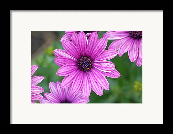 Purple Flower Framed Print featuring the photograph Purple by Jennifer Englehardt