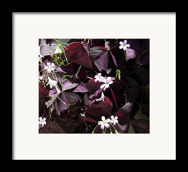 Flowers Framed Print featuring the photograph Purple Leaves With Tiny Pink Flowers by Stephanie H Johnson