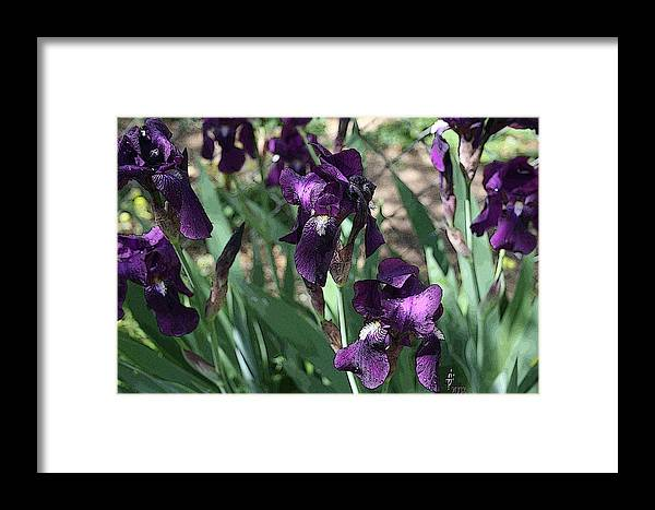 Flowers Framed Print featuring the photograph Purple Majesty by Janey Loree