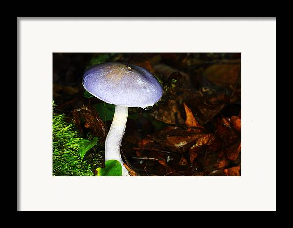 Russula Cyanoxantha Framed Print featuring the photograph Purple Mushroom Russula Cyanoxantha by Andrew Pacheco