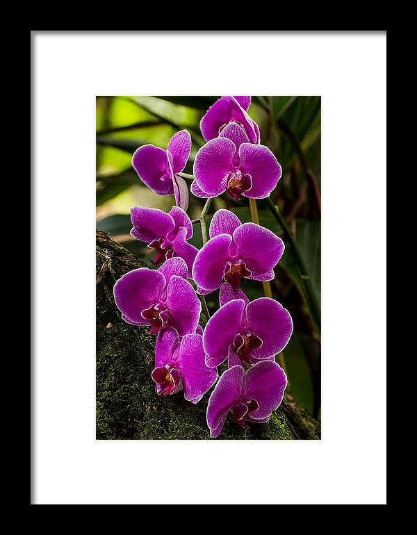 Orchid Framed Print featuring the photograph Purple Orchid by Zina Stromberg