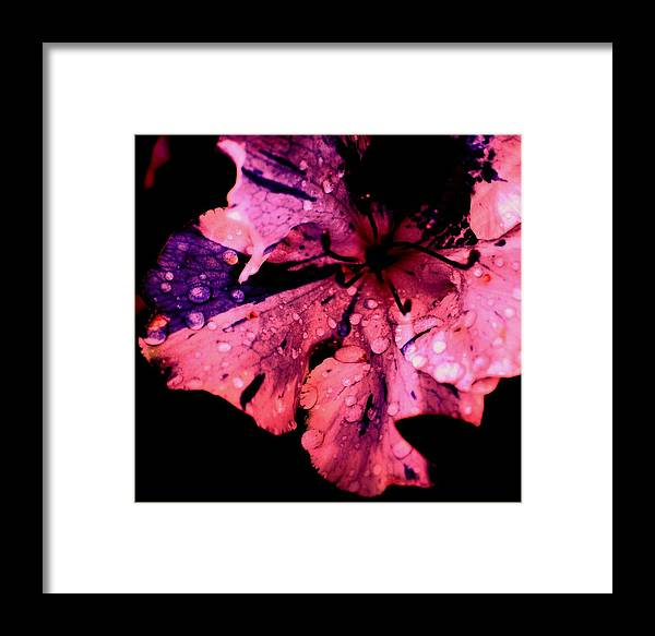 Flower Framed Print featuring the photograph Purple Rain by Trudi Southerland